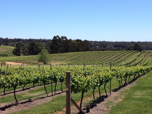 Boyup Brook Lifestyle - Vineyard (JN)